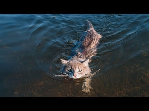 Funny Cats Falling in Water Compilation (2017)