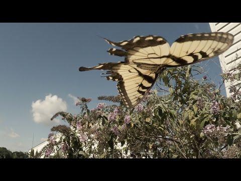 Butterflies in a Rural Wind