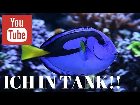 Ich Parasite In Saltwater Aquarium: Follow Ich Guidelines To Fix The Problem