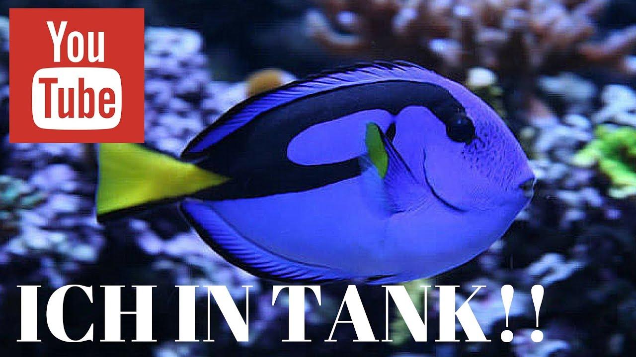 ich parasite in saltwater aquarium follow ich guidelines to fix the