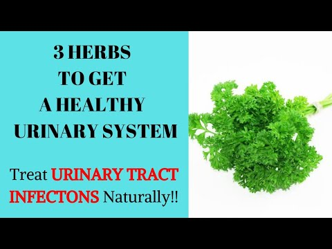 3 Herbs To Get A Healthy Urinary System | Treat UTI Naturally | Natural Remedies