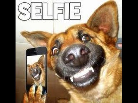 Funny Dog Videos On Youtube