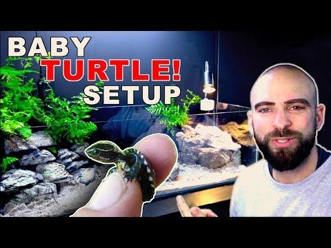 BABY TURTLE AQUARIUM SETUP || STEP BY STEP || MD FISH TANKS