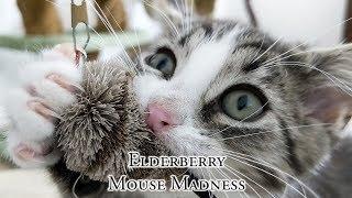 Elderberry Mouse Madness thumbnail