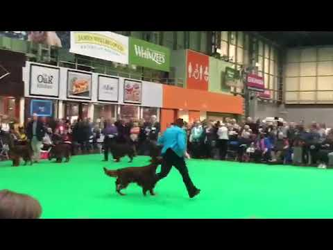 Crufts Open Dog 2019 Sarah Tupper