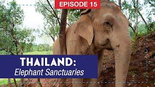 Thailand - ELEPHANT SANCTUARY - Don't Ride the Elephants!