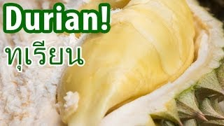 Amazing DURIAN at a Fruit Farm in Nonthaburi, Thailand (นนทบุรี)