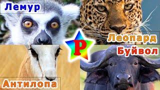 Животные африки для детей. Развивающая угадайка. Голоса животных.