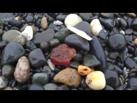 Agate hunting on Damon Point Beach, Ocean Shores, WA