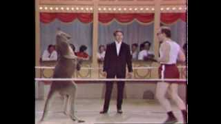 Circus Boxing Kangaroo