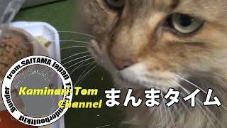 はい、どーも!カミナリ・トムです。 これがうちの猫です。 今回はまんまタイムを撮影しました。 腹を空かすと「ニャーニャー」うるさいです。 いつも、飯食うとき寝る時以外は外に ...
