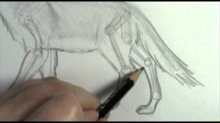 How to draw dog  wolf legs and paws