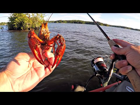 Fishing With Live Crawfish On Lake Martin (Spotted Bass)