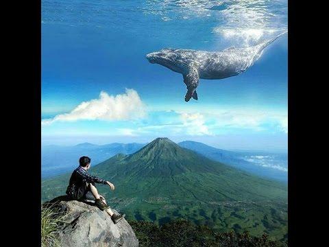 Unduh 6000 Gambar Ikan Hiu Picsart HD Gratis