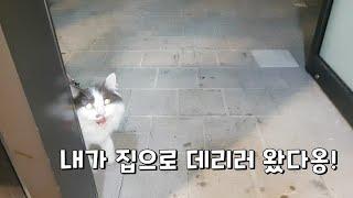 집사 가게로 찾아와 집까지 에스코트 해주는 고양이