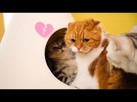 남편 고양이의 애정공세에 짜증난 고양이 부인