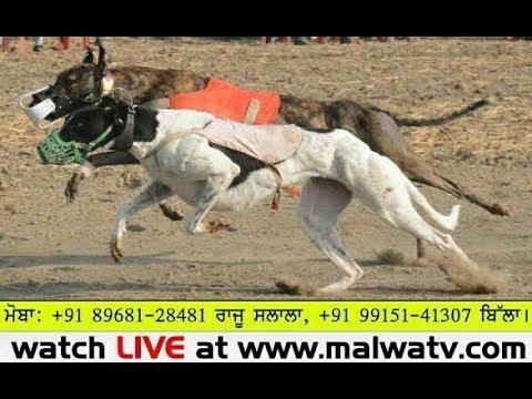 Malwa tv dog racing betting peperangan betting maronda