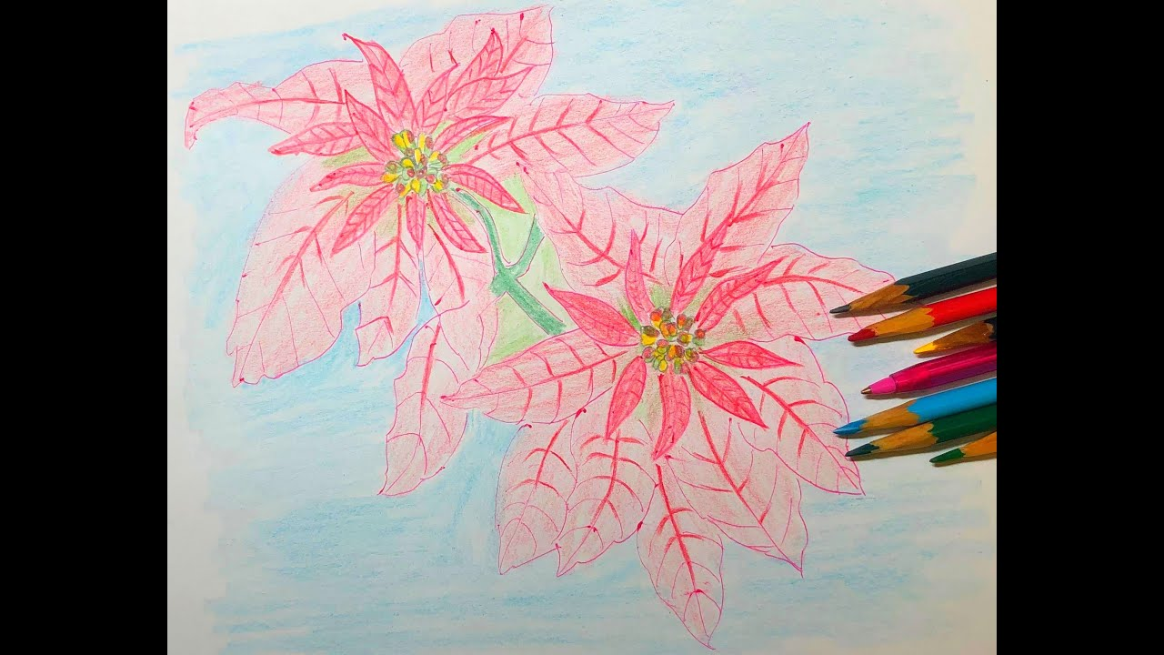 Poinsettia is the best flower for Christmas: blessings; business is booming.一品红是圣诞节的最佳花朵:祝福;生意红红火火.