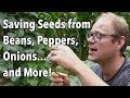 Saving Seeds From Beans Peppers Onions...and More