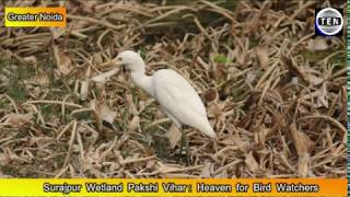 Surajpur wetland Heaven for Bird Watchers, a must visit place in Gr Noida during winters thumbnail