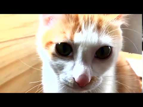 Cats jumping into the owner to wake up1