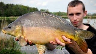 Łowienie karpii i karasii z pleśniawką na kulki, metoda i feeder  - wędkarstwo