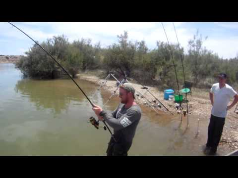 Catfish Fishing On The River Ebro, Spain. 148 Lb Wels Catfish