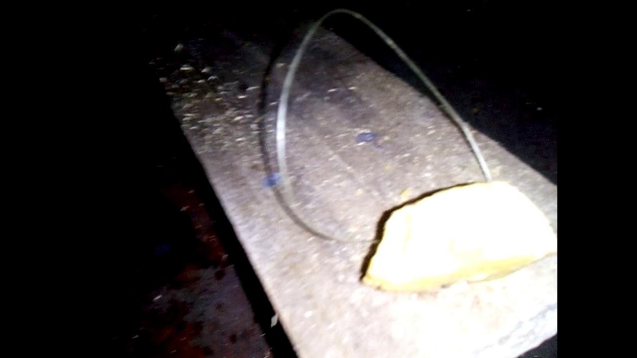 Как сделать капкан для крыс фото 744