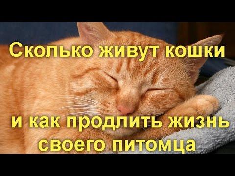 Как долго живут кошки