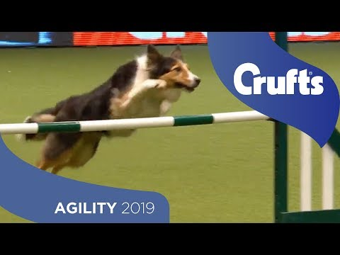 Agility - International Invitation - Large - Jumping | Crufts 2019