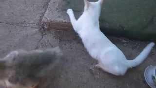 гусенок хочет съесть кота