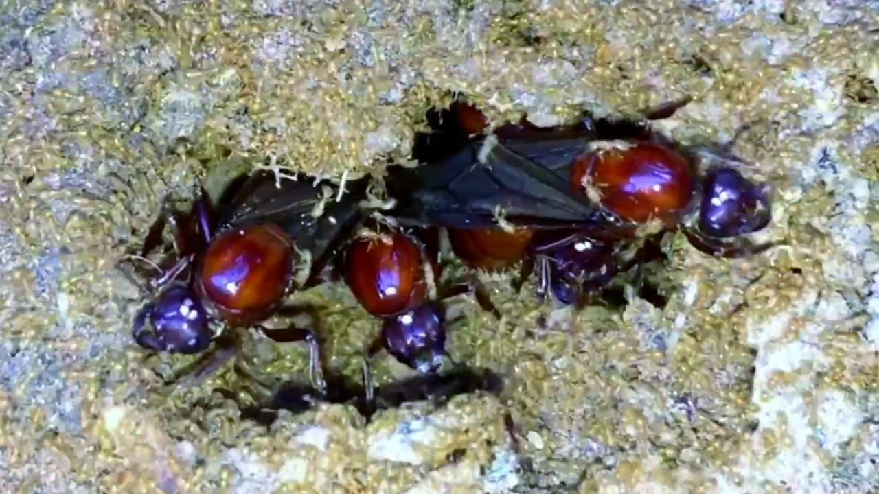 ใช้ชีวิตในป่ากับสราวุฒิ ปี 1 ตอน 4 (หาเก็บแมงมัน/Subterranean Ants Hunting/从蚂蚁做饭)