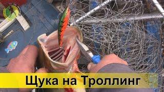 Удачная ловля щуки троллингом на воблер с лодки р. Десна