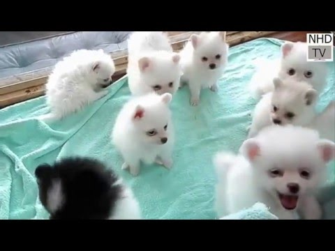 Cutes dogs   Cutest dog in the world   Cute dogs clips 2016