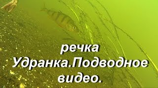 Подводное видео.Речка Удранка.Underwater video. Udrank's small river.