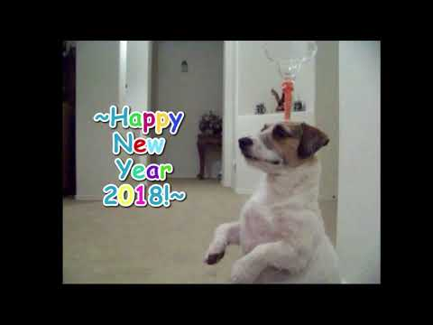 Happy New Year from Jesse - 2018 is Year of the Dog