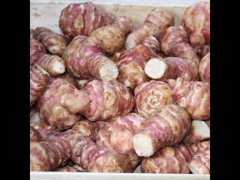 Топинамбур. Полезный и вкусный корнеплод.