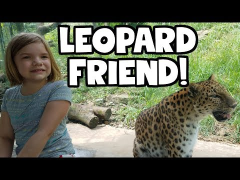 Leopard Friend! Up close with the big wild cat!