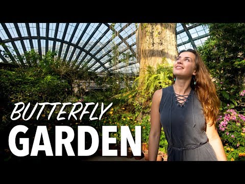 BEST thing to do in PENANG - Entopia Butterfly Garden Malaysia thumbnail