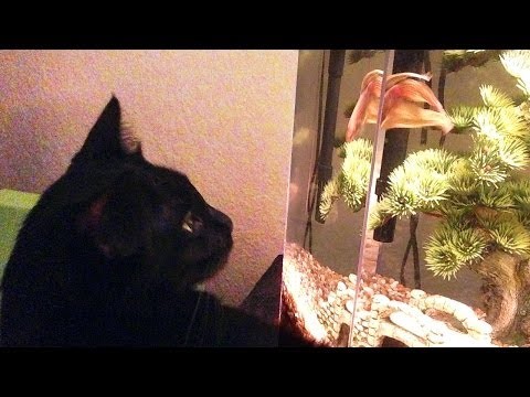 CAT vs FISH
