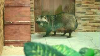 Все О Домашних Животных: Енотовидная Собака Римма