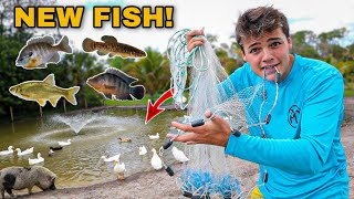 CASTNETTING *NEW* EXOTIC FISH in CREEK for My BACKYARD POND!!