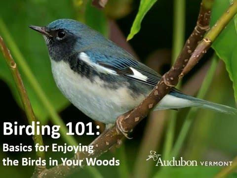 Birding 101- Backyard Woods