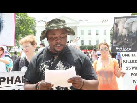 5th Annual International March for Elephants in D.C. Against the Ivory Trade (August 12, 2017)