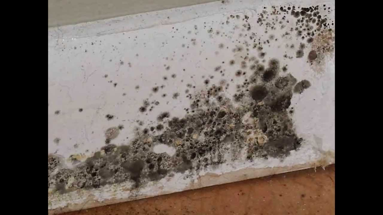 Black Mold In Bathroom By Optea Youtube