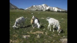 Deep Lake, Snowy Range, Pack Goats