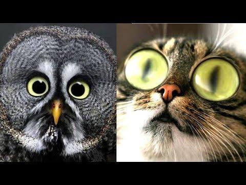 Se und Lustige Tiere! 2019  Lustige Tiere zum Totlachen! vol.16  Funny DuTube
