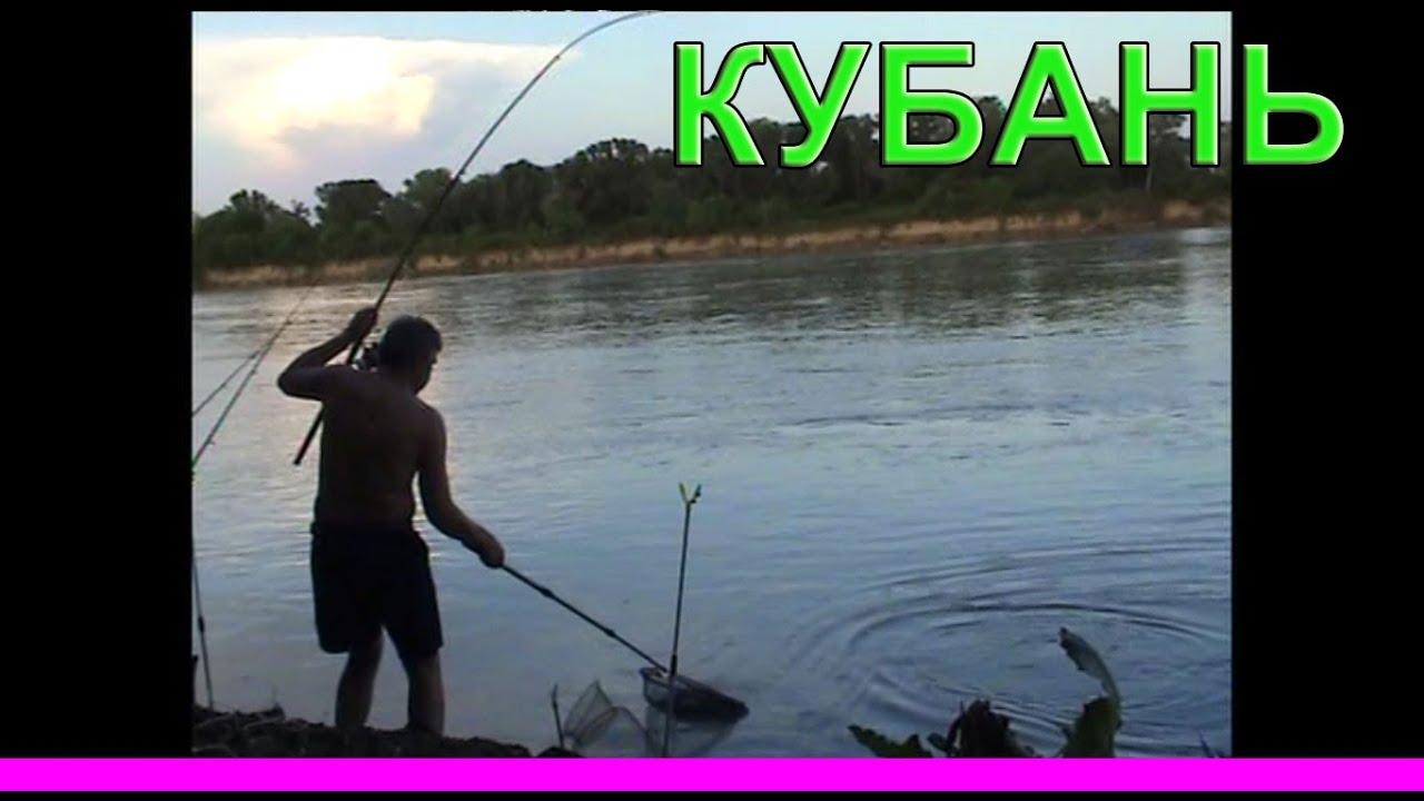 река КУБАНЬ. Рыбалка. Ловля на донку. Fishing. американский сом 1,7кг. Поймал на уклейку