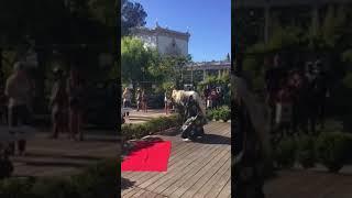Lion Dance shishimai 獅子舞
