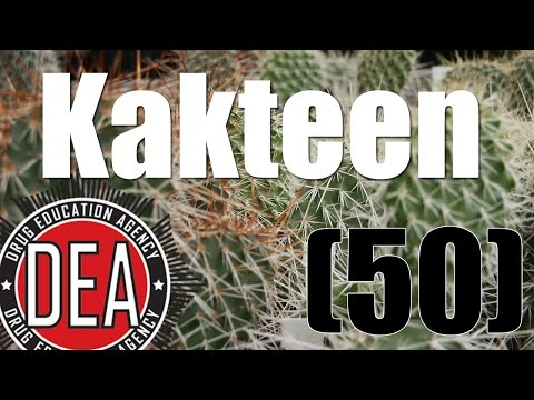 Psychoaktive Kakteen / Besorgte Eltern (RE-UPLOAD) | Drug Education Agency (50)